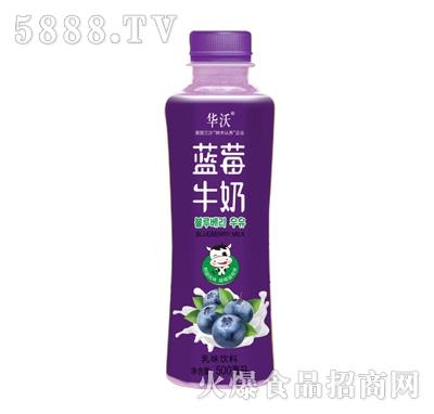 华沃蓝莓牛奶500ml