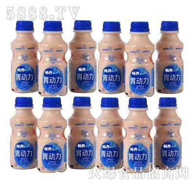 畅养胃动力乳酸菌饮品