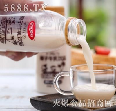 可可那特椰子牛乳饮品瓶装