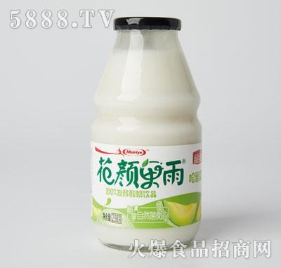 每日椰发酵酸奶饮品哈密瓜味
