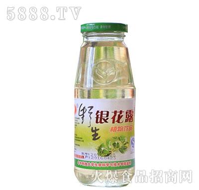 金银花露植物饮品