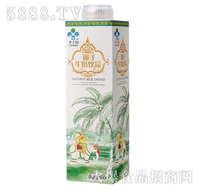 李子园牛奶椰子饮品600ml