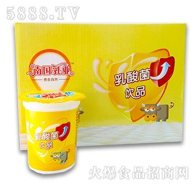 乳酸菌饮品185mlx12
