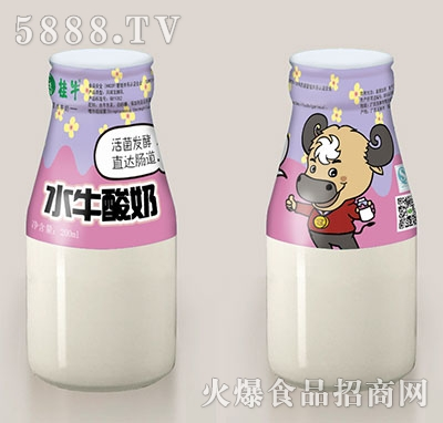 桂牛水牛酸奶200ml