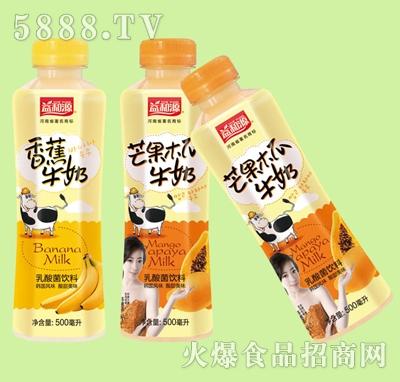 益和源500ml乳酸菌乳味饮料
