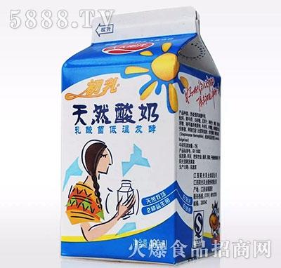初乳天然酸奶460ml