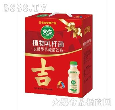 吉悠植物乳酸菌330mlx8瓶礼盒装
