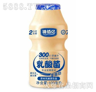 锦佰亿乳酸菌饮品原味