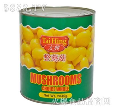 海山蘑菇罐头(整菇)产品图