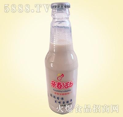 亲春活动豆奶饮料280ml