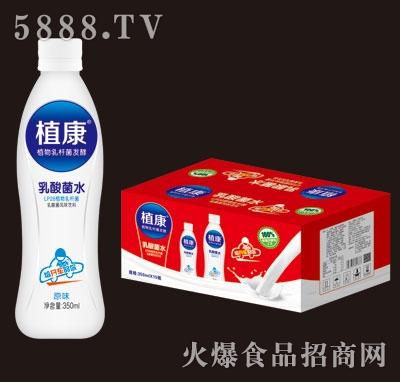 植康乳酸菌水饮品350mlX12