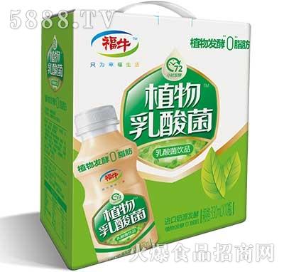 福牛植物乳酸菌饮品手提