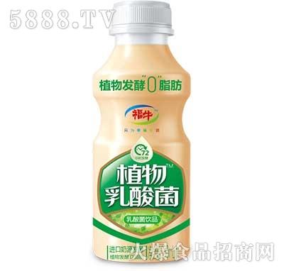 福牛植物乳酸菌330ml