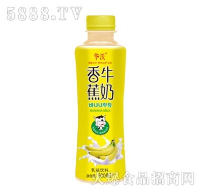华沃香蕉牛奶500ml产品图