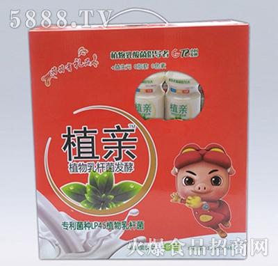 植亲乳酸菌原味礼盒装
