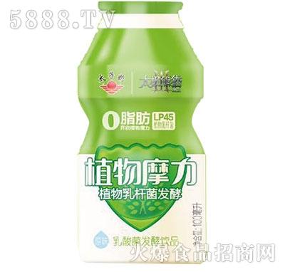 太子奶植物摩力乳酸菌发酵乳100ml