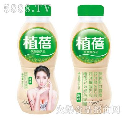 植蓓乳酸菌饮品原味340ml