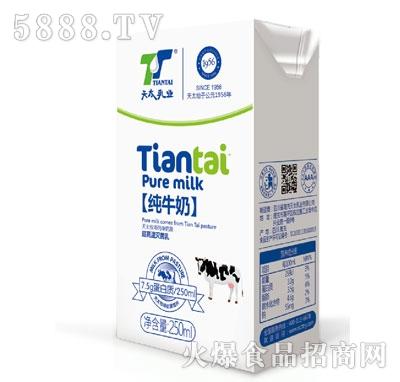 天太乳业纯牛奶250ml产品图