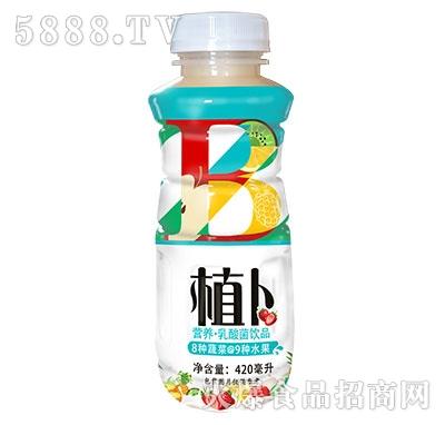 植卜营养乳酸菌饮品420ml