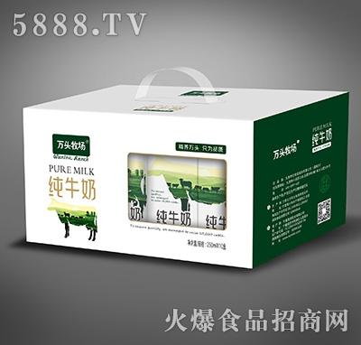 万头牧场纯牛奶250mlx12盒产品图