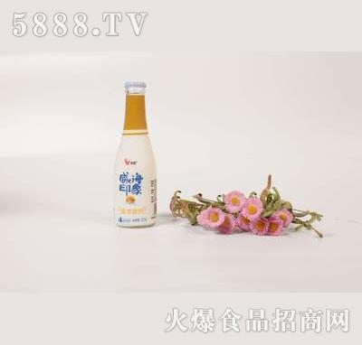壹鹏威海印象香草酸奶225g