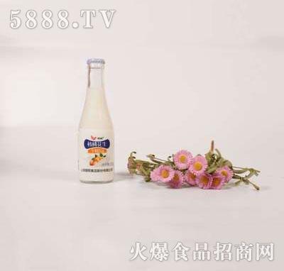 壹鹏核桃花生牛奶饮品220g