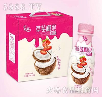 启致草莓椰果果粒酸奶饮品310ml×10瓶