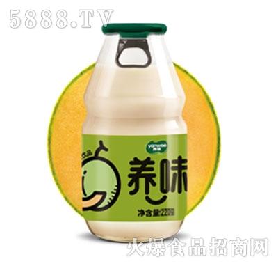 养味牛奶饮品哈密瓜味特渠专供220g