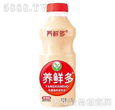 养鲜多乳酸菌风味饮品草莓味1.25L
