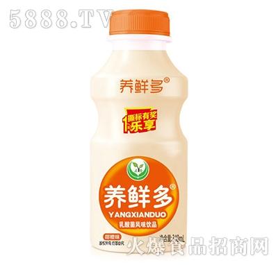 养鲜多乳酸菌风味饮品甜橙味340毫升