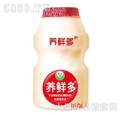 养鲜多乳酸菌风味饮品100ml