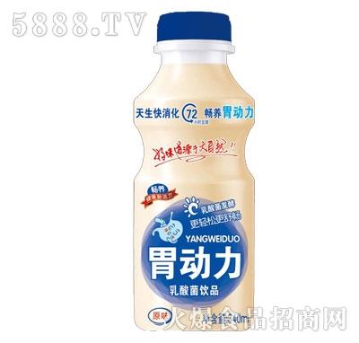 畅养胃动力乳酸菌饮品原味340ml(瓶)产品图