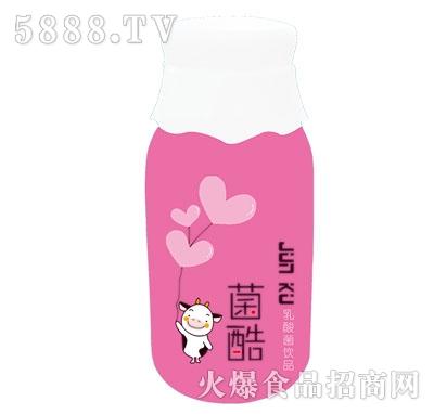 智爽菌酷乳酸菌饮品(瓶)
