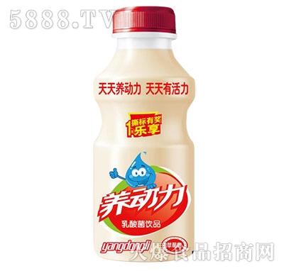 养动力乳酸菌饮品草莓味