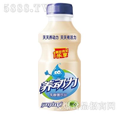 养动力乳酸菌饮品原味