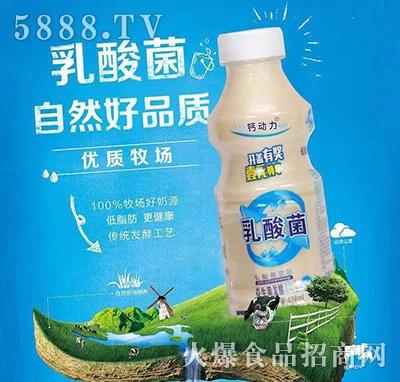 钙动力乳酸菌饮品