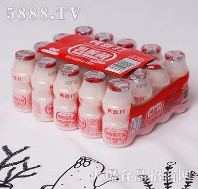 钙动力乳酸菌饮料原味塑包