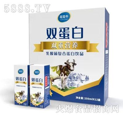 花花牛乳酸菌复合蛋白饮品250mlX12