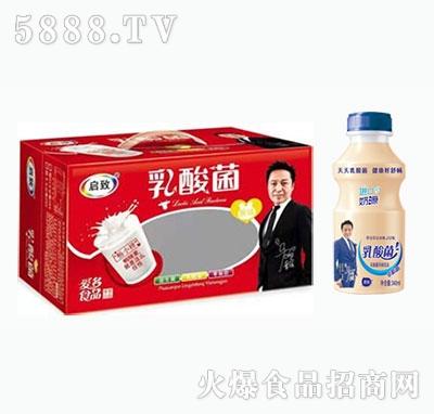 启致乳酸菌风味饮品340ml