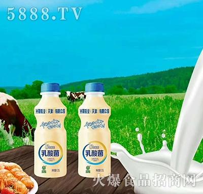 光明乳业乳酸饮品340ml
