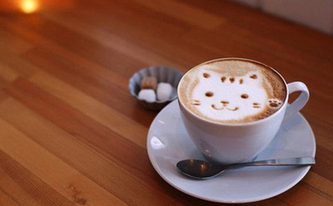 该种动物主要以咖啡豆为食