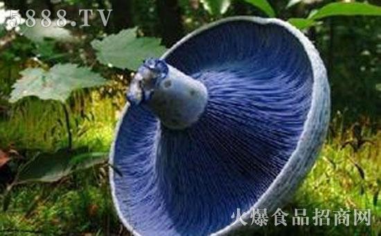 用蘑菇做动物造型图片