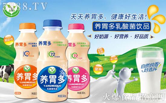 养胃多乳酸菌饮品,营养好品质