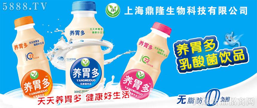 养胃多乳酸菌饮品